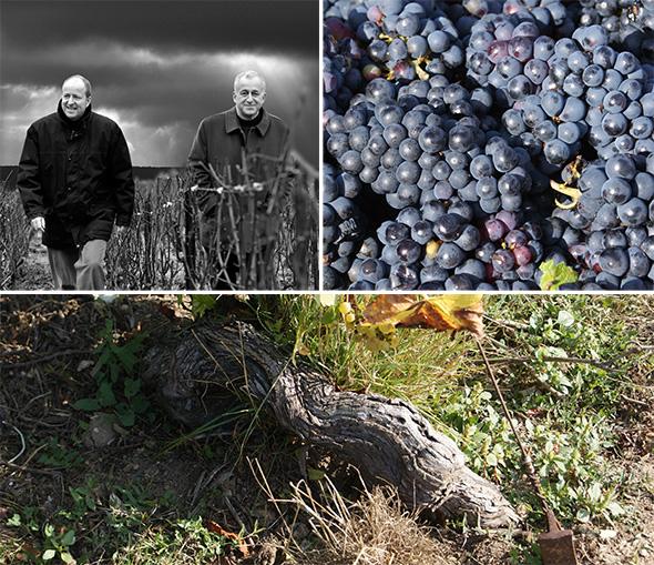 li: die Chiquet-Brüder, re: reifer Pinot Meunier, u: gesundes Bodenleben bei Jacquesson (Fotos: Weingut)