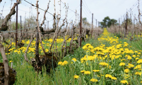 In den Weinbergen von Pascal Doquet. © Champagne Doquet