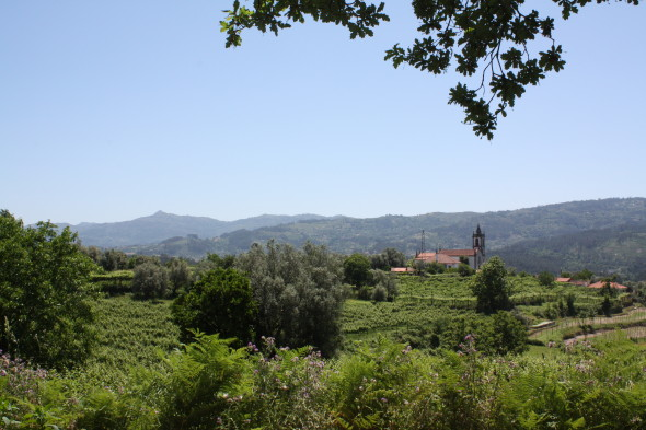 Landscape_Vineyard and church