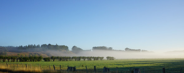 martinborough_morgennebel