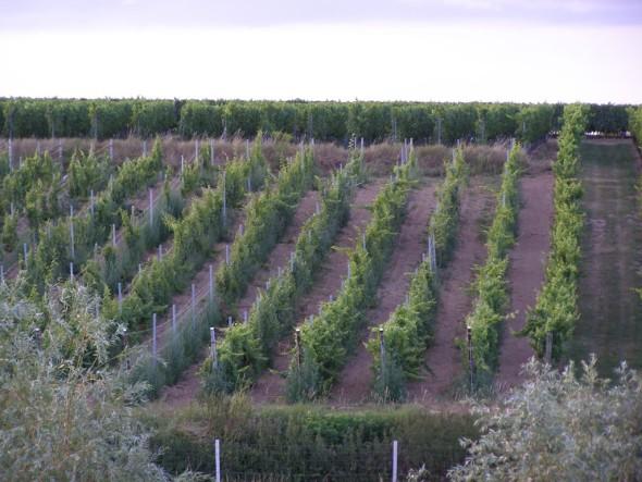 Der Südpfalzweinberg ist ein Archiv unserer Weinkultur. Helft mit, ihn zu erhalten!