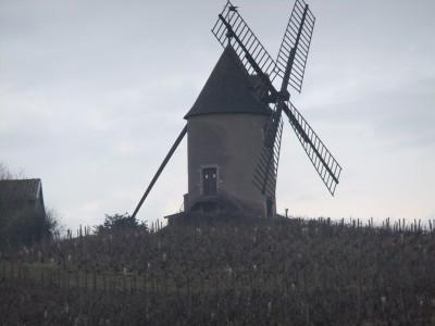 Beaujolais 2014 022